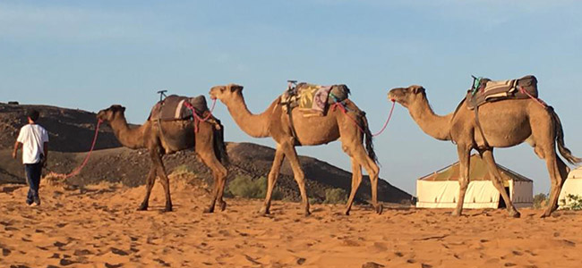 Five days tour to desert to desert from Casablanca